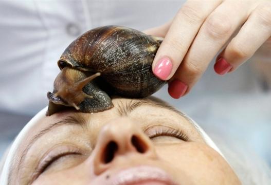 Екстракт от охлюв - мода или ефективно лечение, охлювът е незаменим източник на здраве и красота, те започват да произвеждат слуз която съдържа протеогликани, отстраняват мъртвите клетки, стимулират кожата към производство на антимикробни вещества
